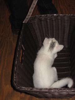 レディ 高田君の猫 008.jpg